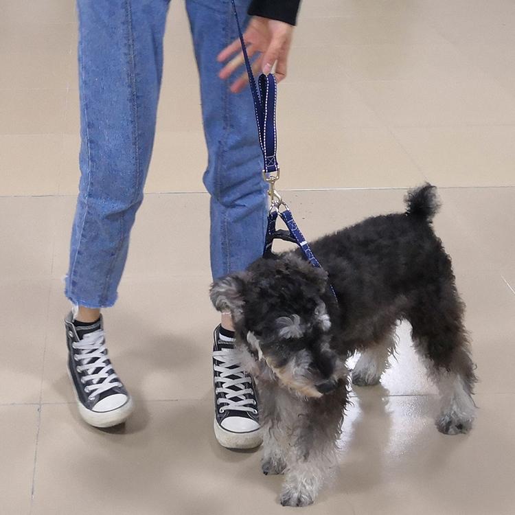 Two handle dog leash (54)