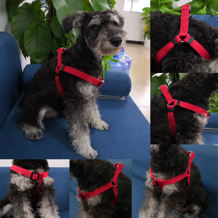dog harness (4)