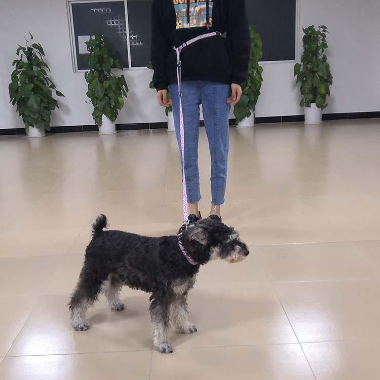 running dog leash (13)
