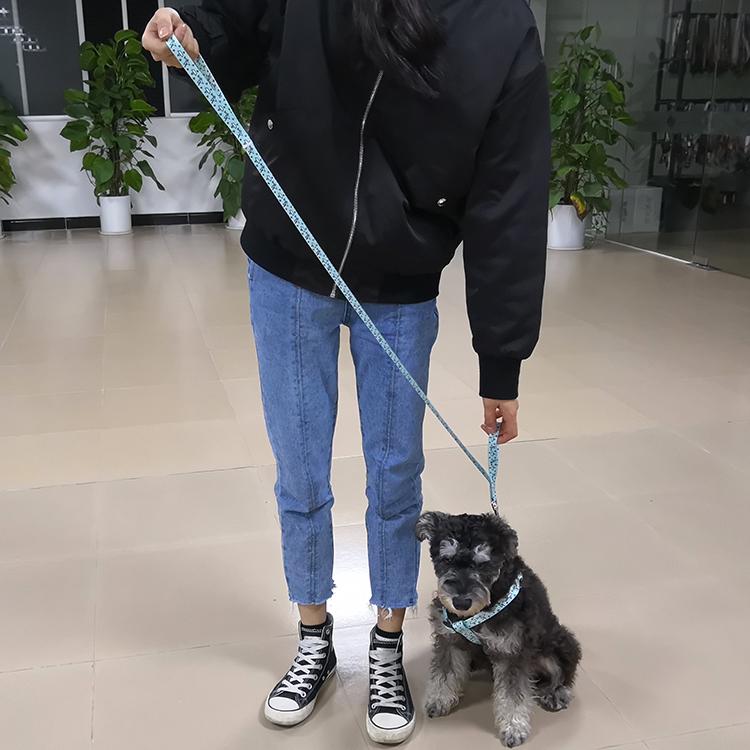 Two handle dog leash (40)