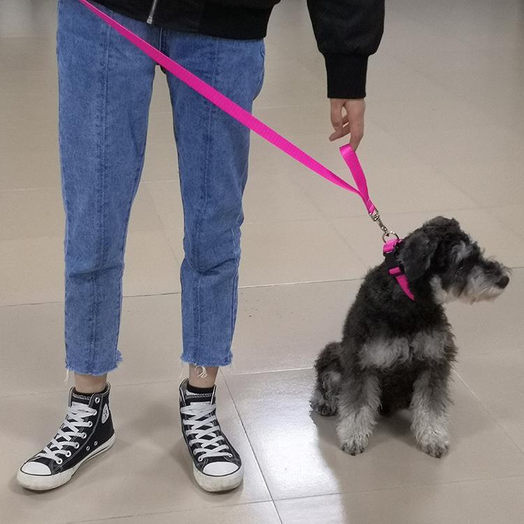 Two handle dog leash (14)