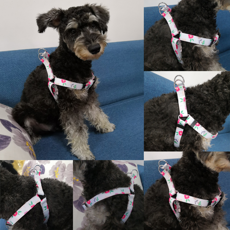 dog harness (12)