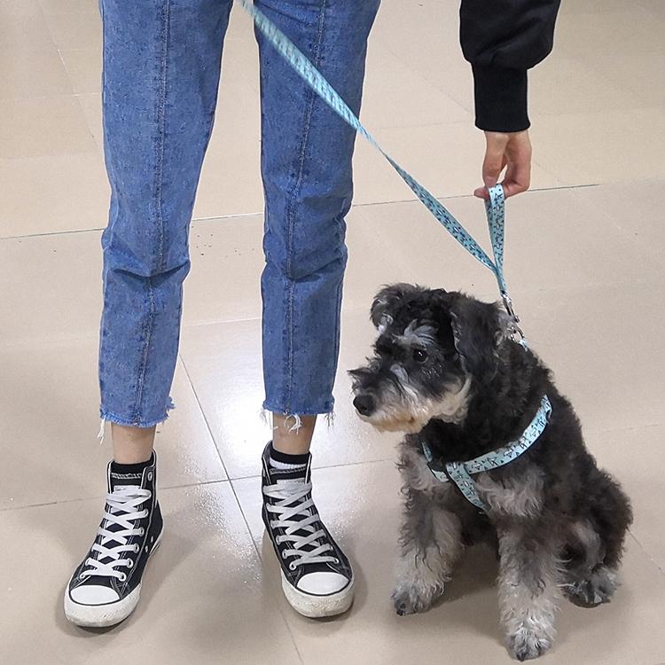 Two handle dog leash (37)