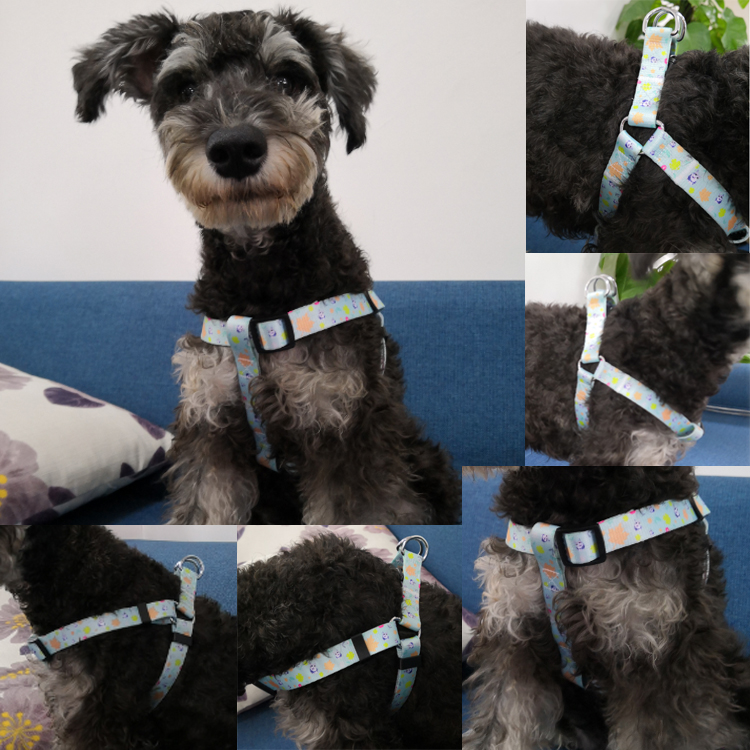 dog harness (9)