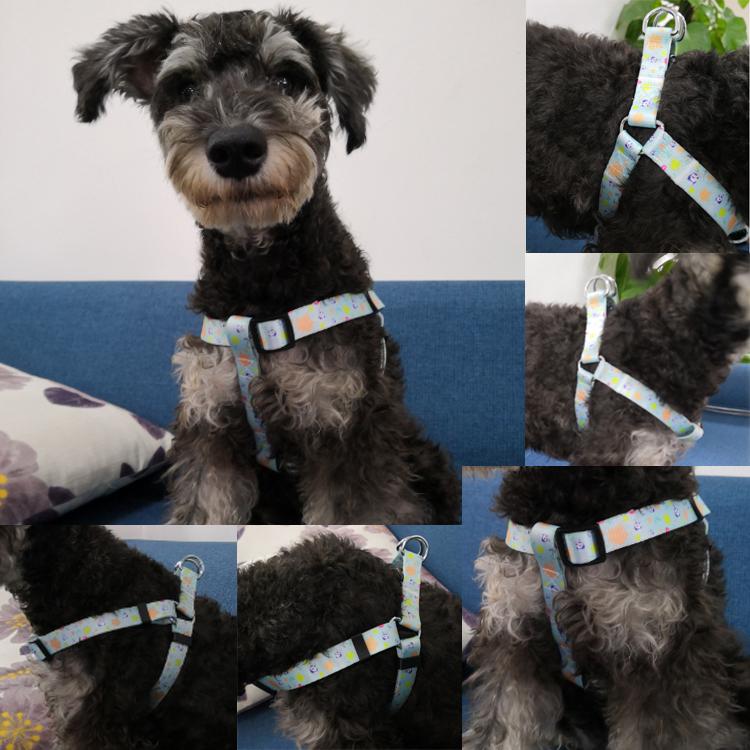 dog harness (9)