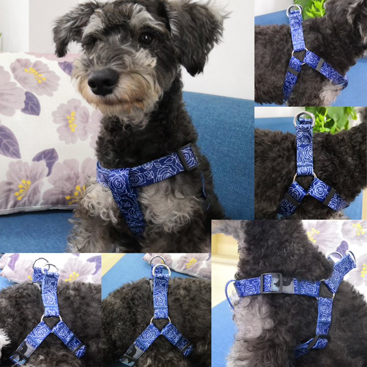 dog harness (10)