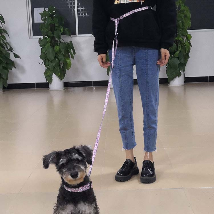 running dog leash (12)