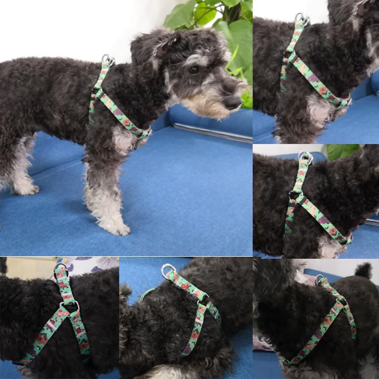 dog harness (6)