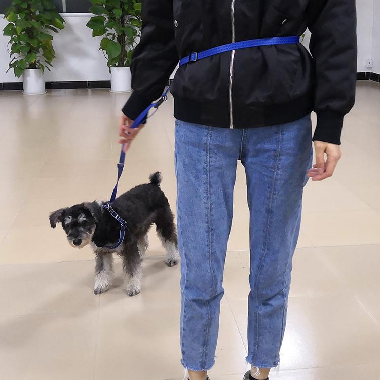 running dog leash (45)