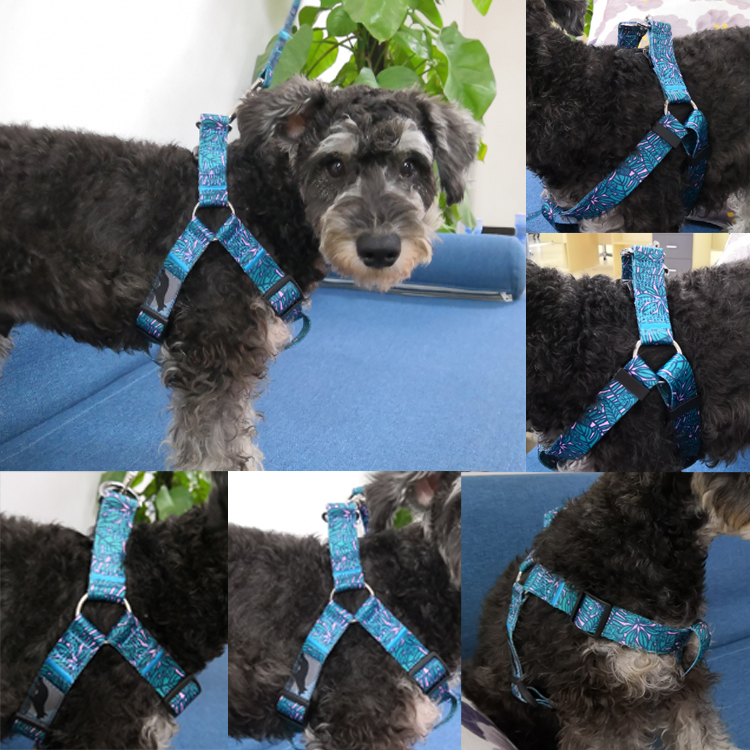 dog harness (11)