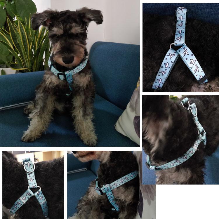 dog harness (19)