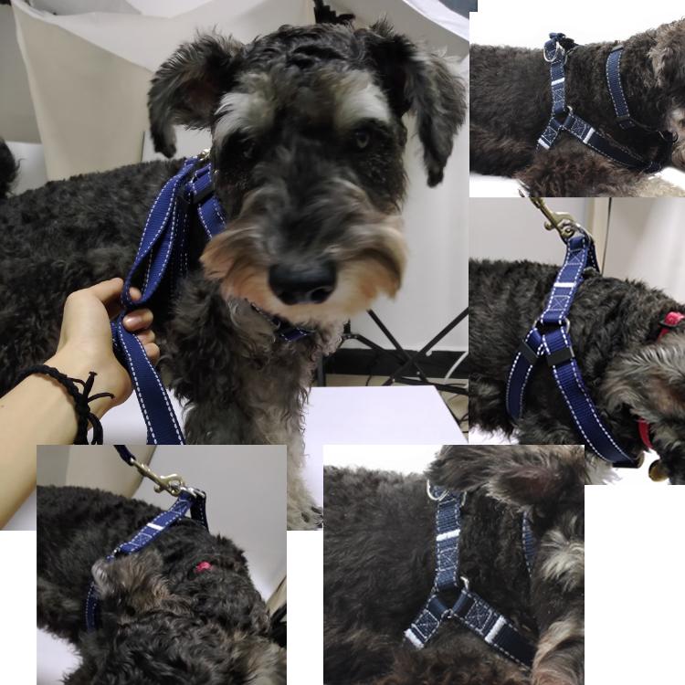 dog harness (16)